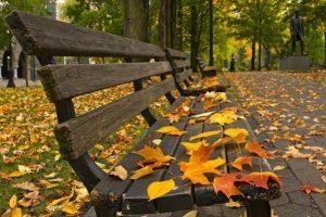 Soạn bài: Mùa lá rụng trong vườn