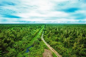 Soạn bài: Bắt sấu rừng U Minh Hạ
